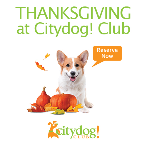 Thanksgiving at Citydog! Club