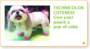 TECHNICOLOR CUTENESS - Give your pooch a pop of color
